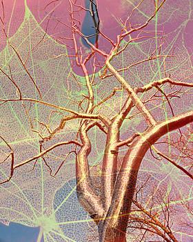 Marty Koch - Tree On Leaf