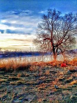 tree on river bank in Atchison. by Dustin Soph