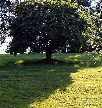 Tree on the Hill by Eva Thomas