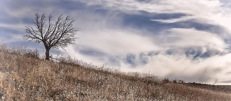 Tree On The Hill by Gene Praag