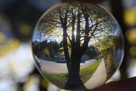 Cathie Douglas - Tree On The Street
