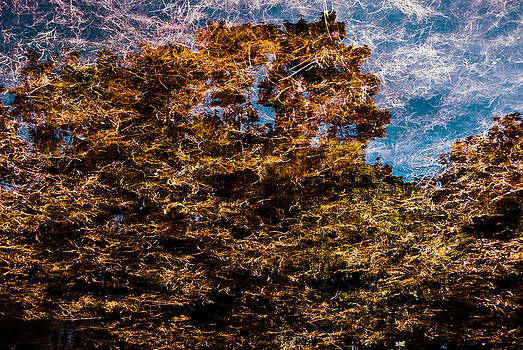Tree Reflection 1 by Grebo Gray