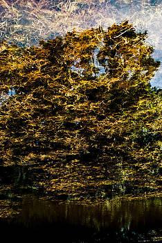Tree Reflection 2 by Grebo Gray