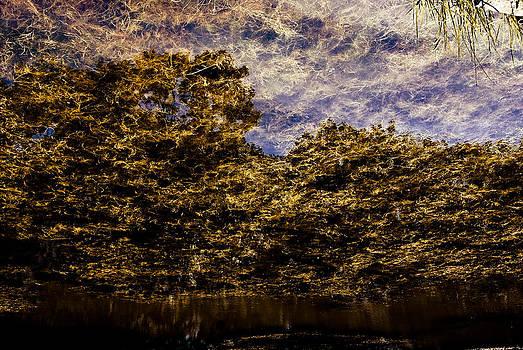 Tree Reflection 3 by Grebo Gray