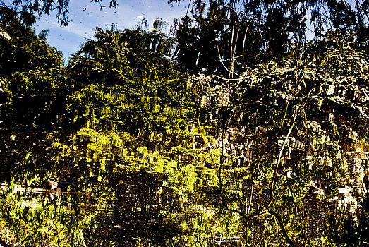 Tree Reflection 4 by Grebo Gray