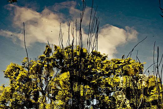 Tree Reflection 5 by Grebo Gray