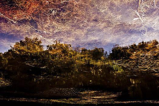 Tree Reflection 6 by Grebo Gray
