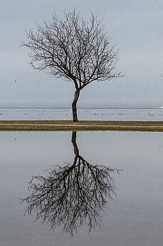 Tree Reflection by Kathy Weigman