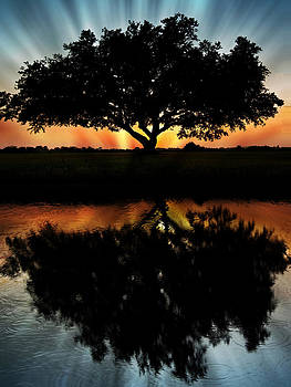 Tree Reflection by Regina  Williams