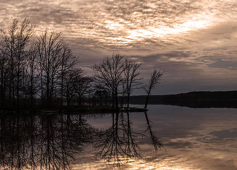 Tree Reflections by LB Christopher