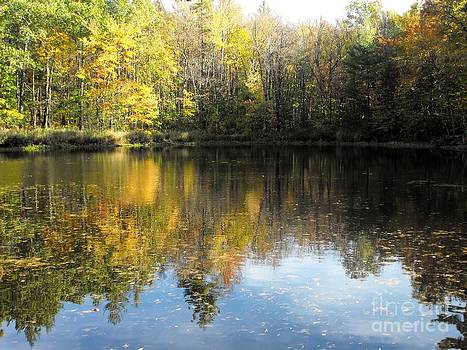 Tree Reflections by Lisa J Gifford