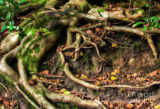 Simon Bratt Photography LRPS - Tree roots escaping