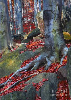 Tree roots by Lilianna Sokolowska