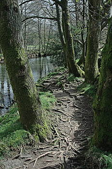 Tree Route Pathway by Kathy Spall