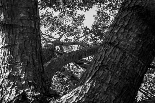 Tree by Samir Chokshi