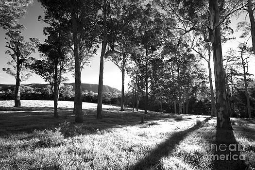 Tree Shadows by David Benson