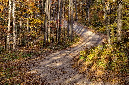 Tree Shadows by Rob Huntley