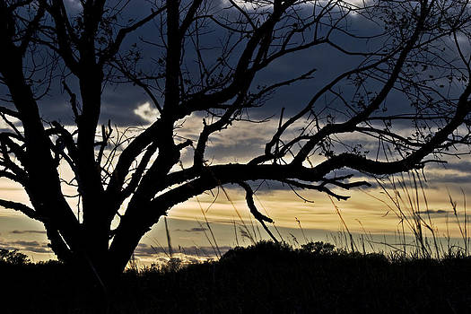 Tree Silhouette by Mark Russell