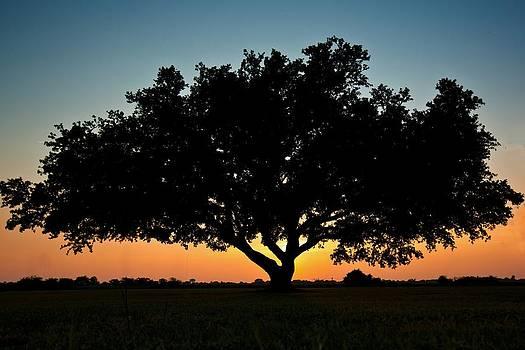 Regina  Williams  - Tree Silhouette