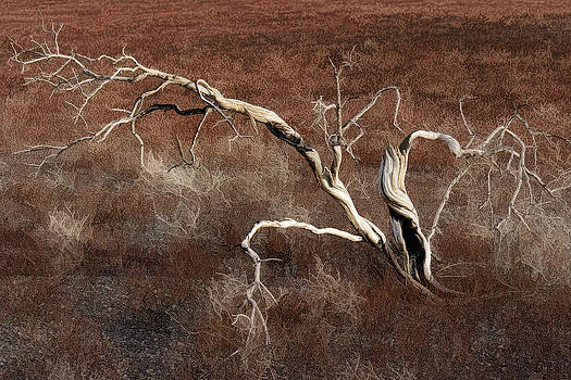 Wes and Dotty Weber - Tree Skeleton