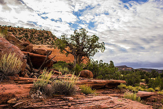 Tree-Sky Red Canyon by Kim Baker