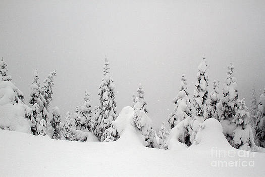Tree Snow Drifts by Denise Lilly