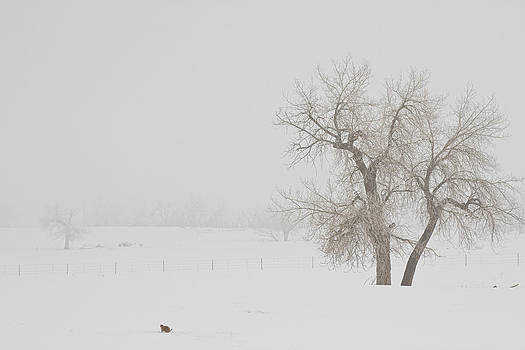 James BO  Insogna - Tree Snow Fog and The Prairie Dog