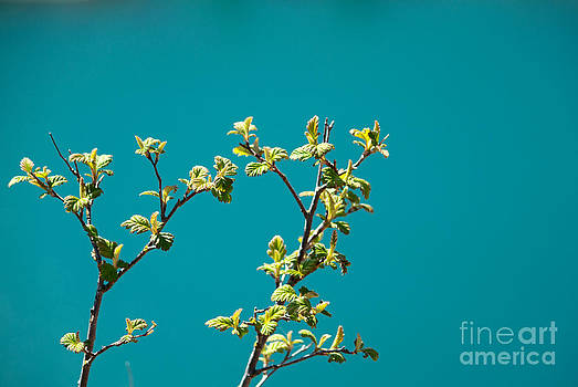 Tree Sprouts by Denise Lilly