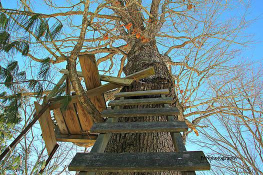 Tree Stand by Freda Nichols