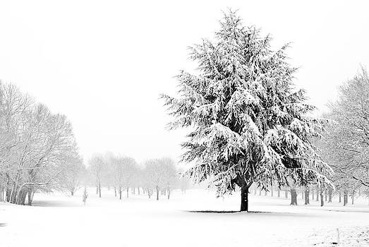 Fizzy Image - tree standing in a field covered in snow