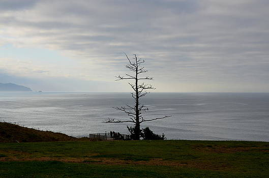 Tree Statue by Linda Larson