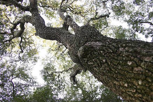 Tree Still by Jessica Snyder