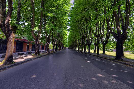 Matt Swinden - Tree Street 2