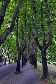 Matt Swinden - Tree Street 3