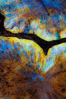 Hakon Soreide - Tree Stump Abstract