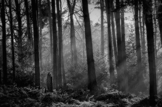 Tree Stump by Darren Marshall