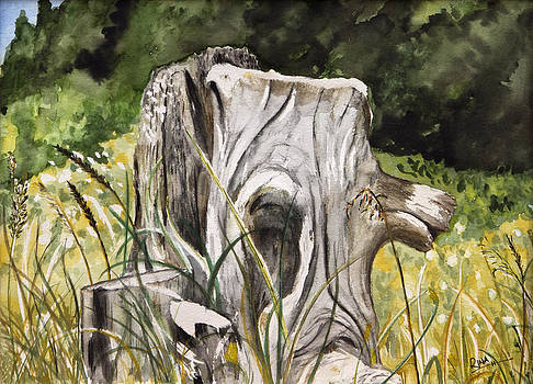 Tree Stump by Rina Bhabra