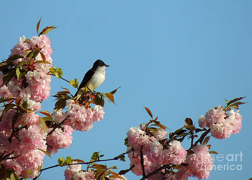 Tree Swallow and the Pink Tree by Pamela Rivera