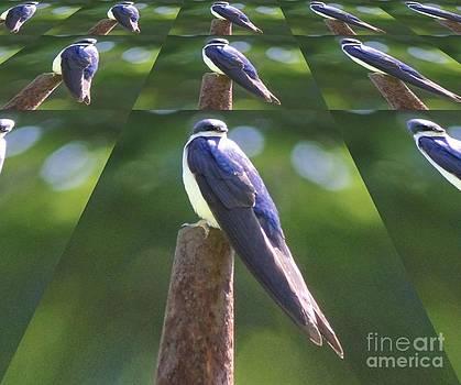 Tree Swallow by Spirit Baker