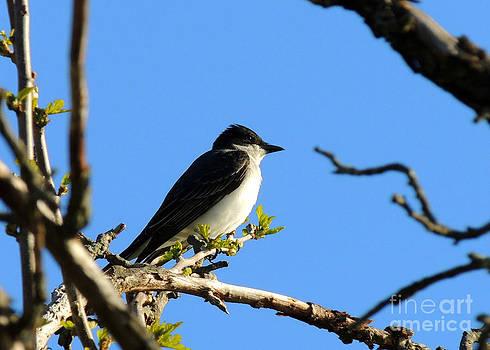 Tree Swallow's Post by Pamela Rivera