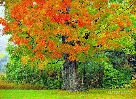 Tree Swing by Terri Gostola