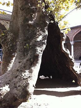 Tree Tent by Towia Libermann