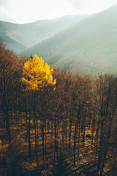 Tree by Tomas Hudolin