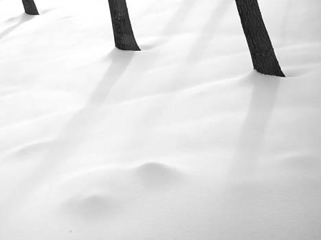 Tree Trunk Trinity in Snow by Nancy De Flon