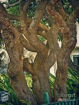 Charles Davis - Tree Trunks