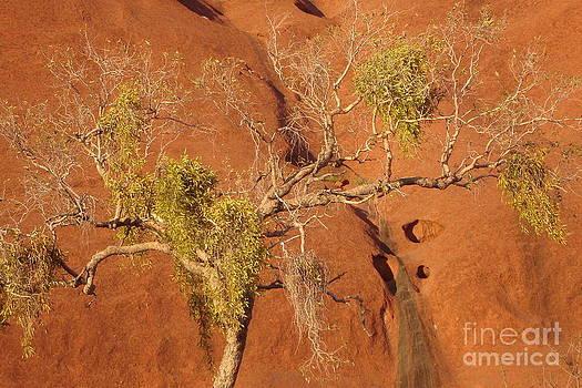 Tree Uluru by Sara  Meijer