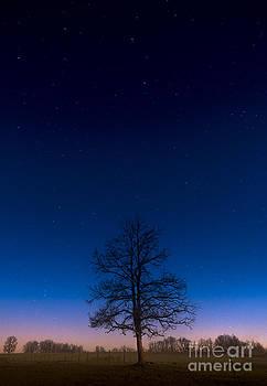 Tree under the Winter stars by Tom Migot