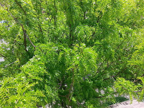 Tree view from treehouse porch by Lee Altman