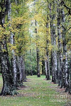 Rachael Shaw - Tree Walk