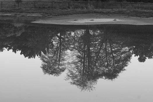 Tree water reflection 21 by Pico Soriano